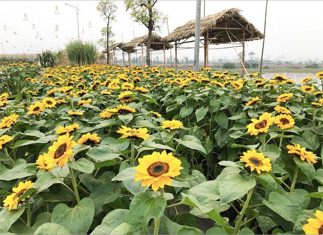 Hé lộ muôn sắc hoa đồng nội hội tụ trên đường hoa xuân Splendora - ảnh 3