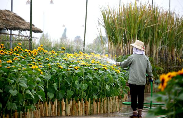 Muôn sắc hoa đồng nội trên đường Home Hanoi Xuan Splendora